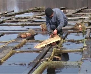 на что нельзя ловить рыбу в воронеже